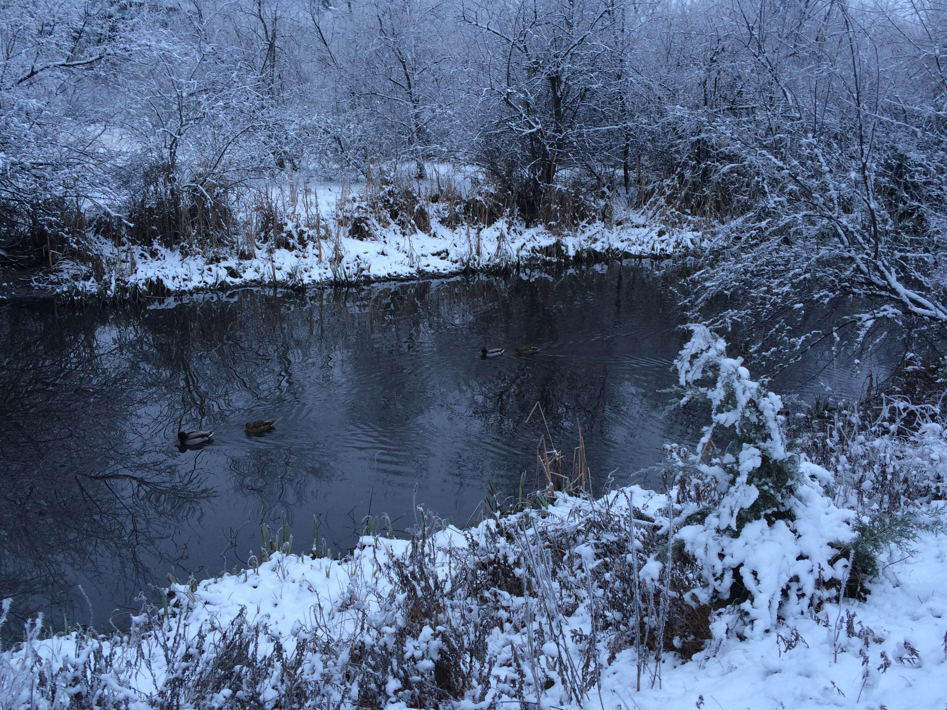 Photos: Ice crystallizes Kathryn Albertson Park Christmas morning ...