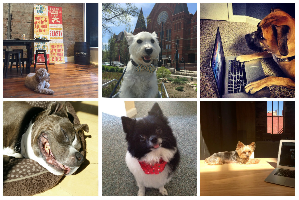 "After seeing a story about ""office dog"" Maggie (from the company FEASTY) get featured in Tech.co, we couldn't help but roundup some of the cutest dogs we could find in Cincy. Here's what you need to know."