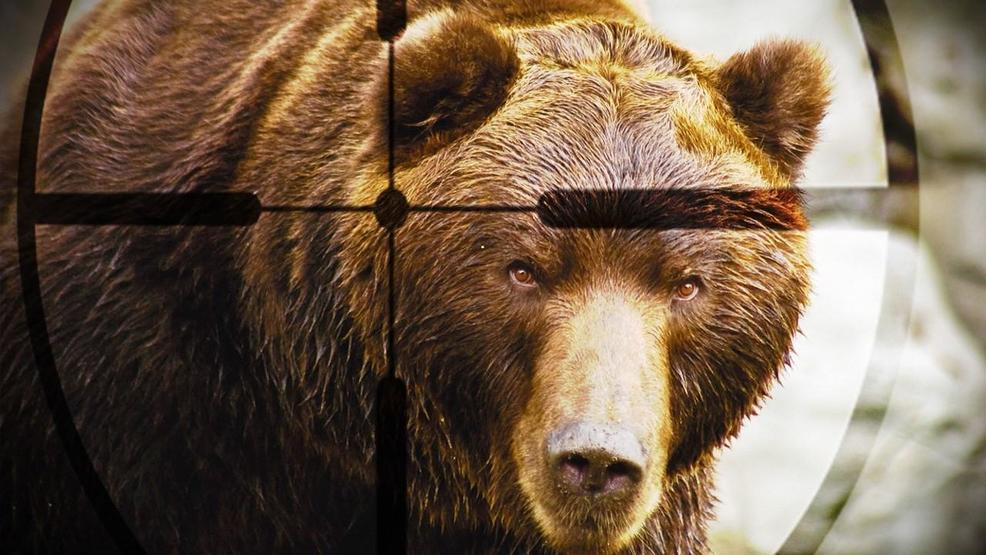 Bear in crosshairs -  Milaw  CC BY-SA 3.0.jpg