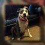Pit bull found dead, owner believes incident could be connected to daughter's bullying