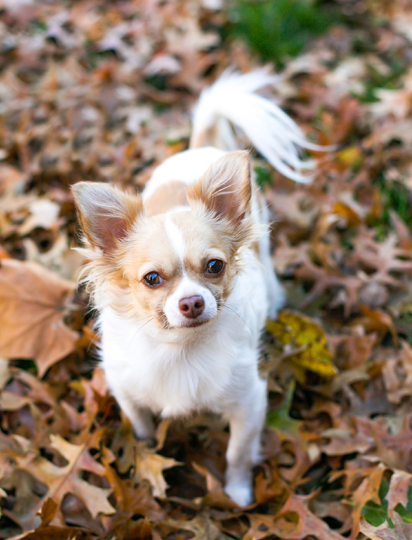 What's one of your hobbies outside of photography? Running! (Photo: Fuzzypants Pet Photography)
