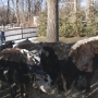 Milking their stay: 9 cows cozy up in Rehoboth yard