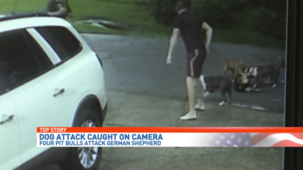 Caught on camera: Four pit bulls attack Escambia County