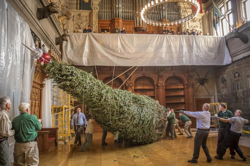 Hoisting the 34-foot Fraser fir tree into position in the Banquet Hall. (Photo Credit: The Biltmore Company)