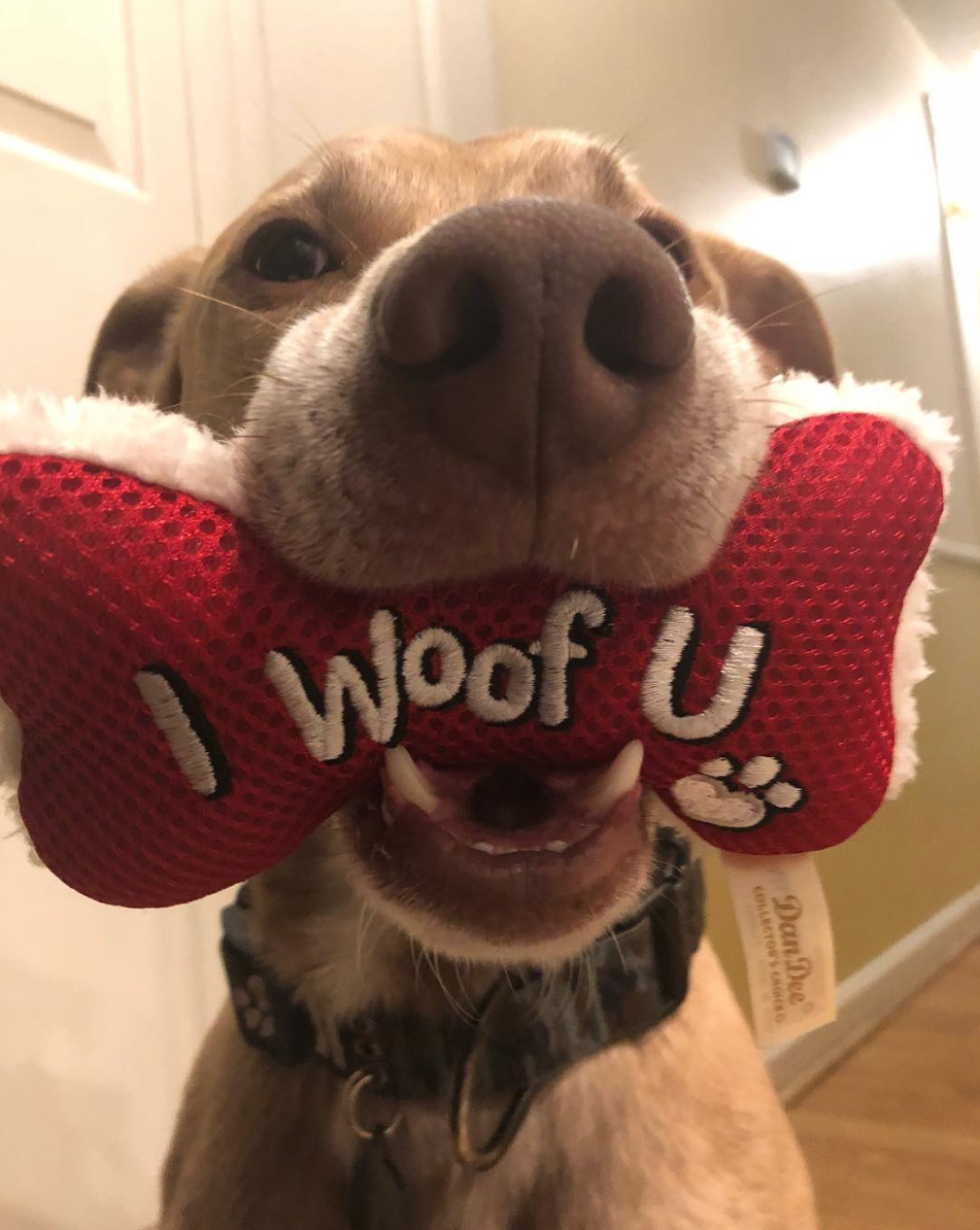 Aww, we woof you too! (Image via @thedoggiemisfitsadventures)