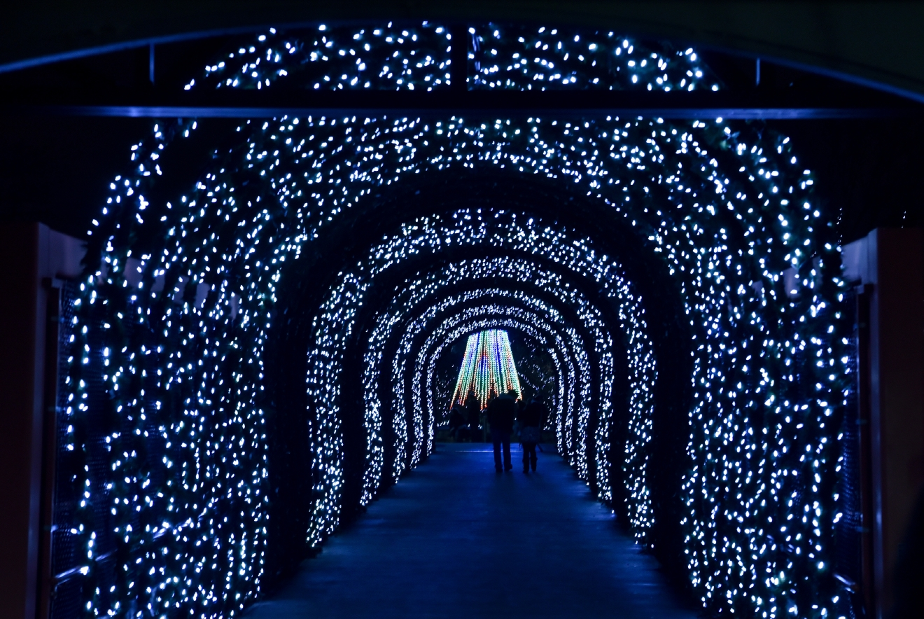 The 34th annual Festival of Lights at the Cincinnati Zoo is the perfect way to experience the holiday season. It runs through January 1, 2017. / Image: Melissa Doss Sliney