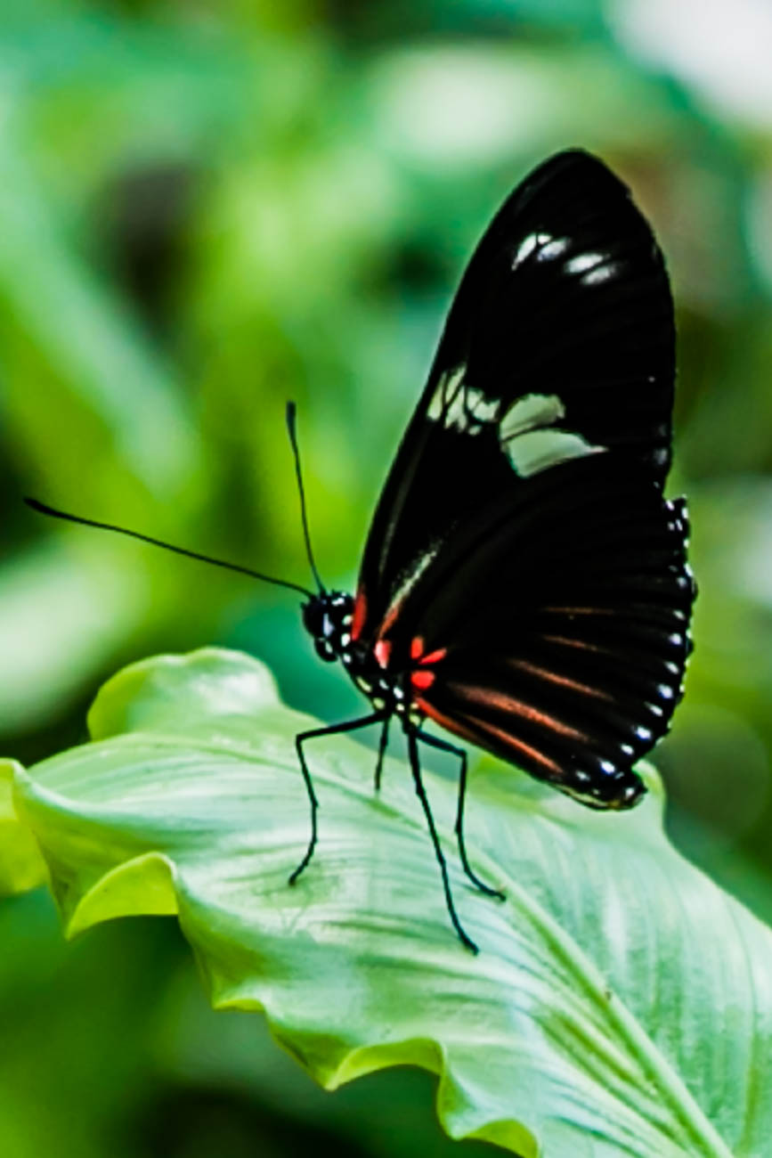 Butterflies of Madagascar, presented by Macy's, brings exotic African butterflies to Krohn Conservatory every day from 10 a.m. to 5 p.m. between March 24 to June 17. These beautiful butterflies aren't native to the Midwest, making their visit especially important for those who appreciate the natural world. ADMISSION: Adults $7, children $4 (5-17 years), and children 4 and under are free. ADDRESS: 1501 Eden Park Drive (45202) / Image: Amy Elisabeth Spasoff // Published: 4.22.18
