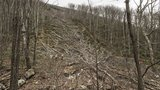 Developers want more time for pipeline tree clearing