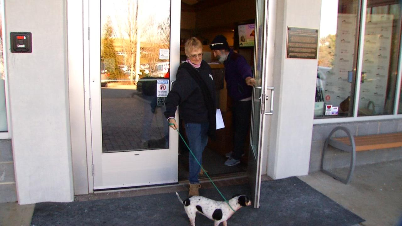 Shelter employees say Taylor went missing about 6 months ago after she ran off from her home in Rutherford County. One week ago, employees say the dog turned up at a Tennessee shelter about 20 miles east of Knoxville. (Photo credit: WLOS Staff)