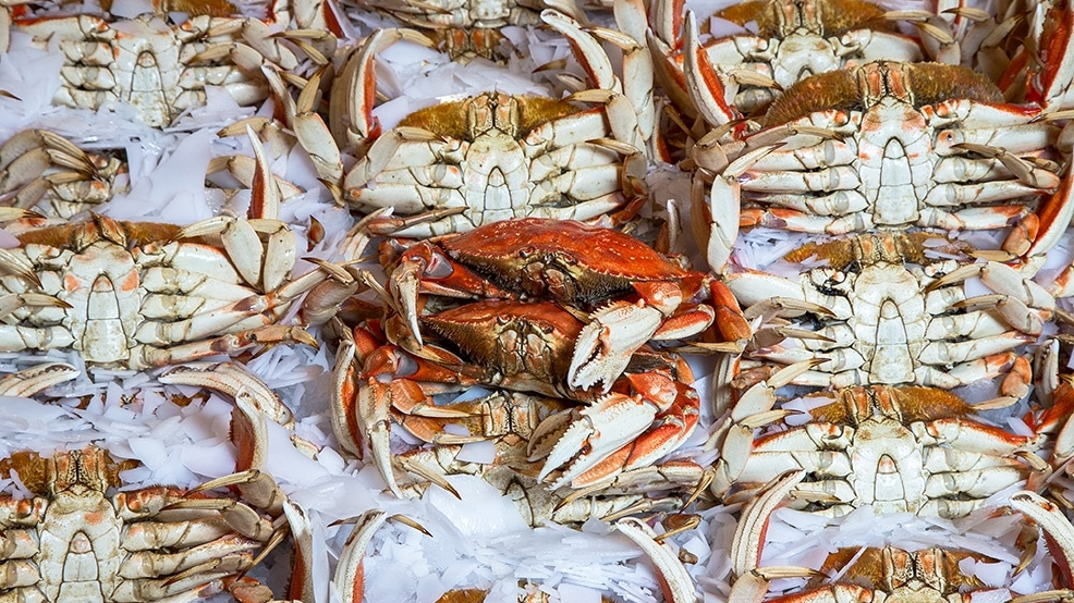 Dungeness crab season is still here seattle refined for Pure food fish market