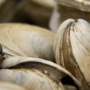 How to shuck clams