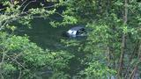 Driver leads deputies on chase, crashes into Clackamas River and flees the scene