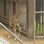 AWW! Woodland Park Zoo offers sneak peek of new baby giraffe