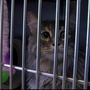 WilCo animal shelter surpasses goal of adopting out 100 cats