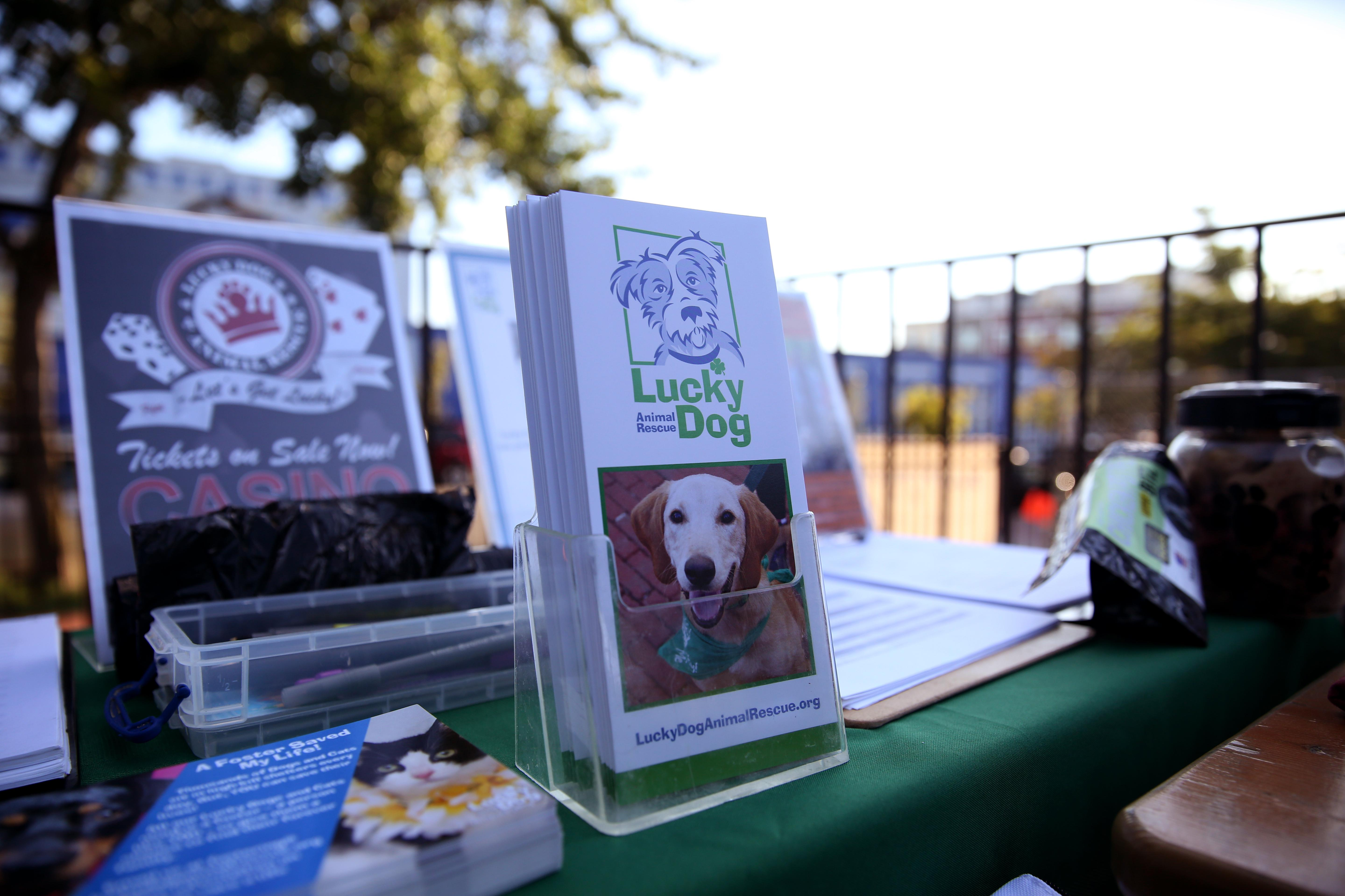 Our event  at The Brig came together with help from Lucky Dog Rescue, Devils Backbone Brewing Company and DogMa. (Amanda Andrade-Rhoades/DC Refined)