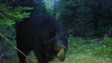 Trail cams capture unseen magic of wildlife in Maine's woods