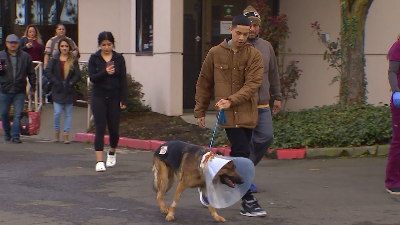 Rex was released from an animal hospital on Sunday. (KOMO file photo)