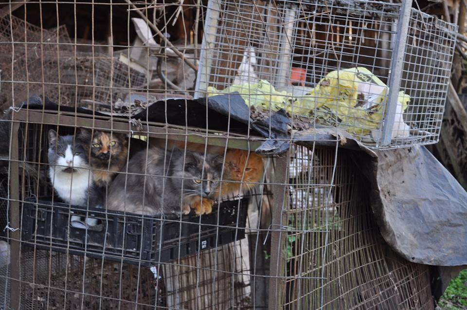 <p>Goats, horses, emus, sheep, rabbits, turkeys, peacocks, ducks, an cats are just some of the animals that were rescued (Photo: Louisa County Sheriff's Office)</p>