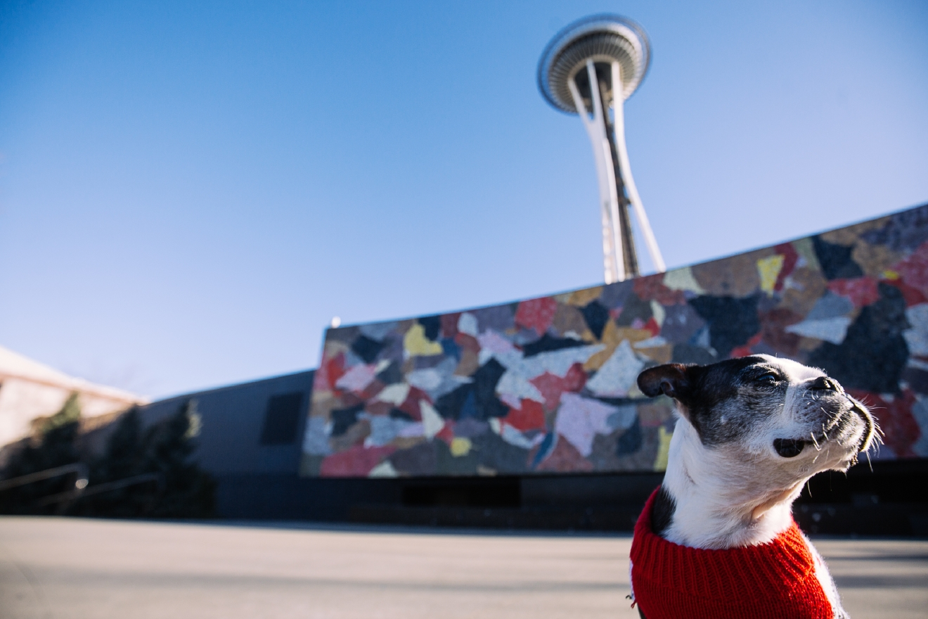 Clyde the Boston Terrier is our Seattle RUFFined spotlight this week! Clyde is 11 years old and is from a breeder in Idaho. Clyde loves everybody. He enjoys snuggling, toys, treats, tricks and goes wild when he gets to play with balloons. His only dislike is when he has to take his monthly pill.   The Seattle RUFFined Spotlight is a weekly profile of local pets living and loving life in the PNW. If you or someone you know has a pet you'd like featured, email us at hello@seattlerefined.com or tag #SeattleRUFFined and your furbaby could be the next spotlighted! (Image: Joshua Lewis / Seattle Refined)