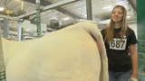 Junior Charolais show promotes leadership skills