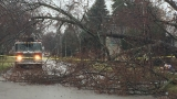 Tree falls on Flint home, brings down powerline