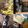 Viewers share their Thanksgiving photos and videos