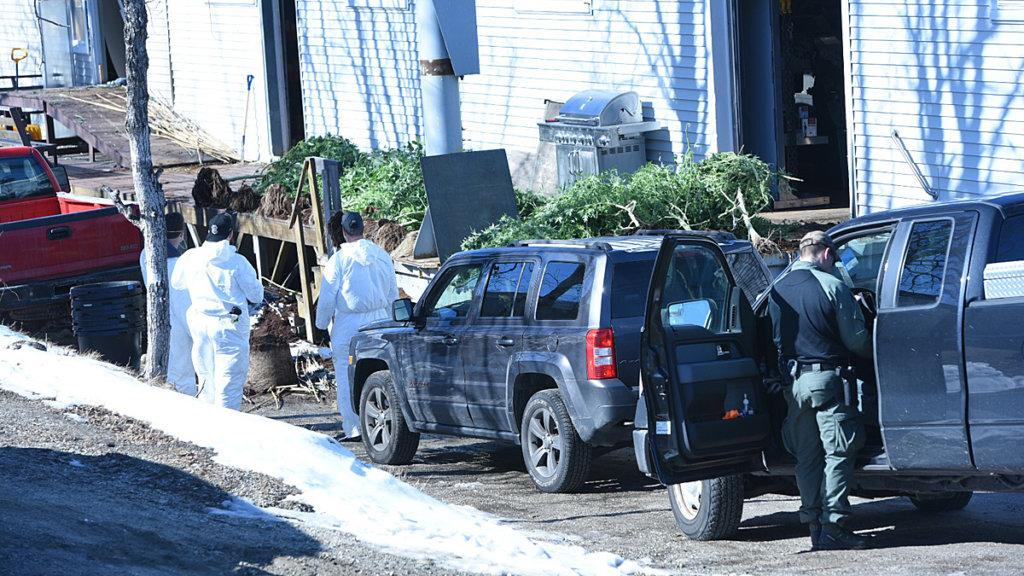 Law enforcement agents take plants out of a building Tuesday morning on Lincoln Street in Lewiston.