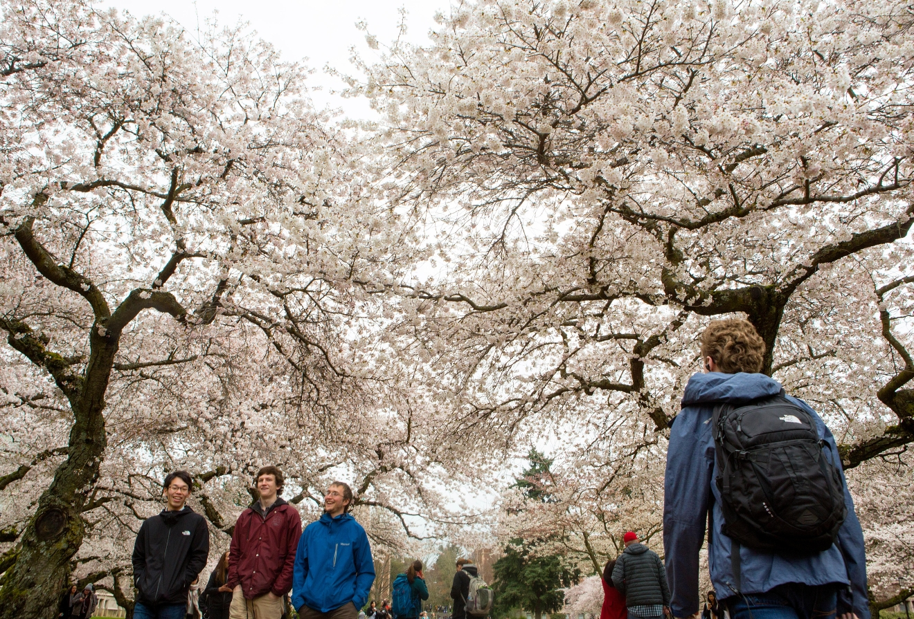 Sure, Spring officially started on March 20 but we don't think it really counts unless the cherry blossoms at University of Washington are out! Now all we need is sun...(Sy Bean / Seattle Refined)