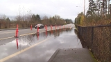 Oh, dam! Beavers flood, shut down busy Western Wash. thoroughfare