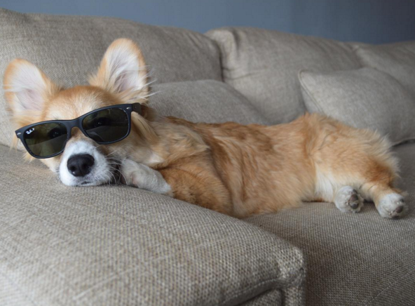 IMAGE: IG user @dcgus/ POST: straight chillin' for #nationalpuppyday. #opulence #rayban #youjealousbro