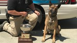 Whitfield Co., Chattanooga Police K9 Teams take top honors at USPCA Regional Spring Trials