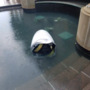 Security robot named Steve drowns on the job in DC