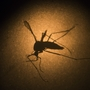 Mosquitoes could be worse than normal this year