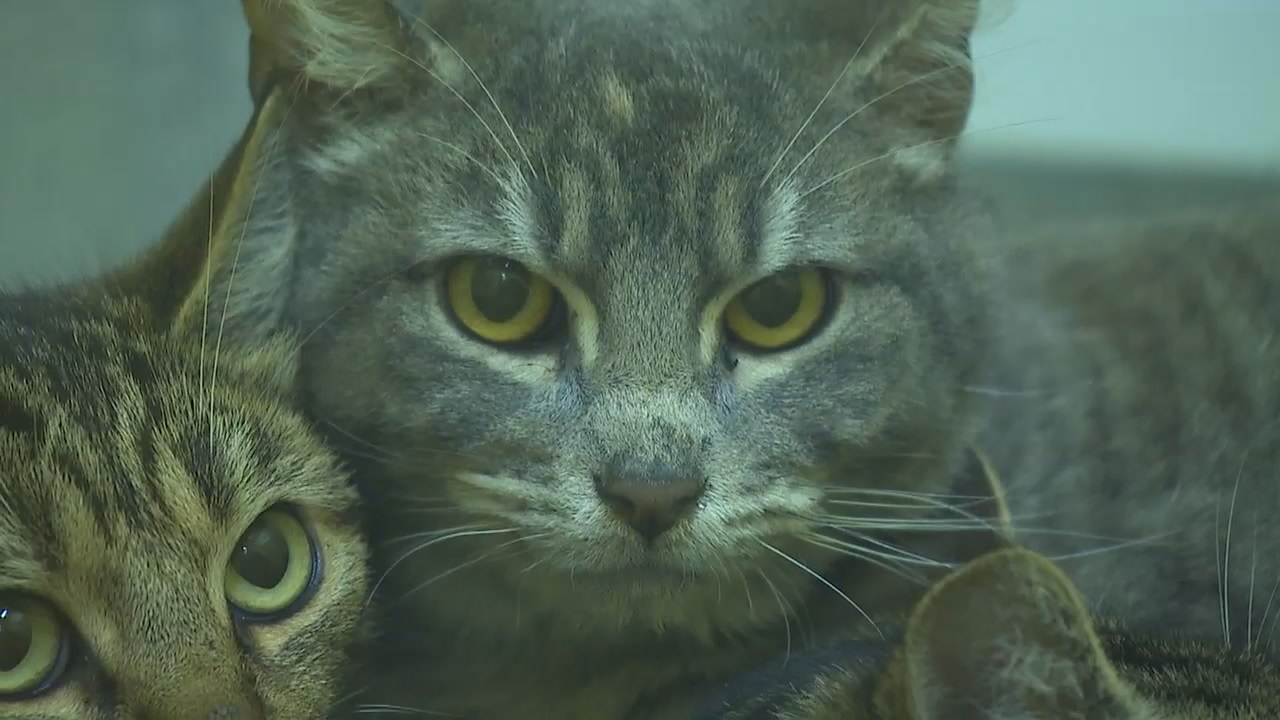 Cats Rescued From Cruelty In Florida