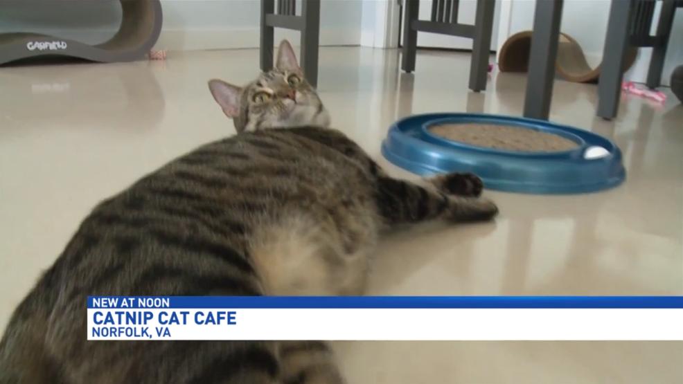 Catnip Cat Cafe Norfolk Va