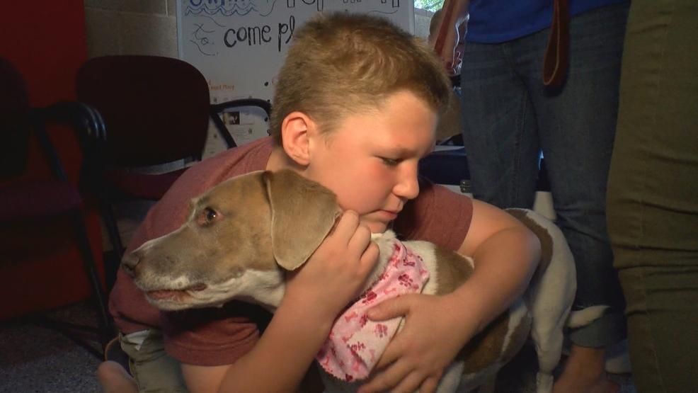 Dog Adoption Shelters Las Vegas