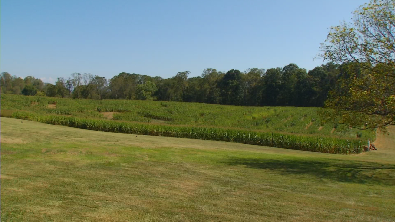 Eliada's Annual Corn Maze is set to open Saturday, Sept. 30. Along with the main attraction, folks can enjoy their famous jumping pillow, hay rides, and spiderweb climber. (Photo credit: WLOS Staff)