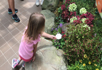A Child Waiting For A Butterfly To Land On Her Landing Pad.jpg