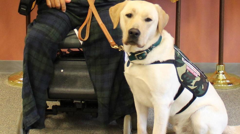 Service Dog Training School Texas