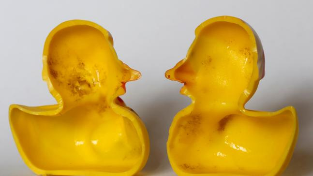 Yucky ducky? Study reveals bath-time toy's dirty secret