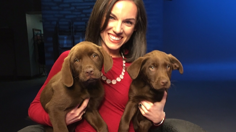 Fur Ever Friend Greater Androscoggin Humane Society Wgme