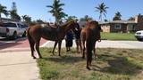 Horse dragged behind trailer in Fort Pierce