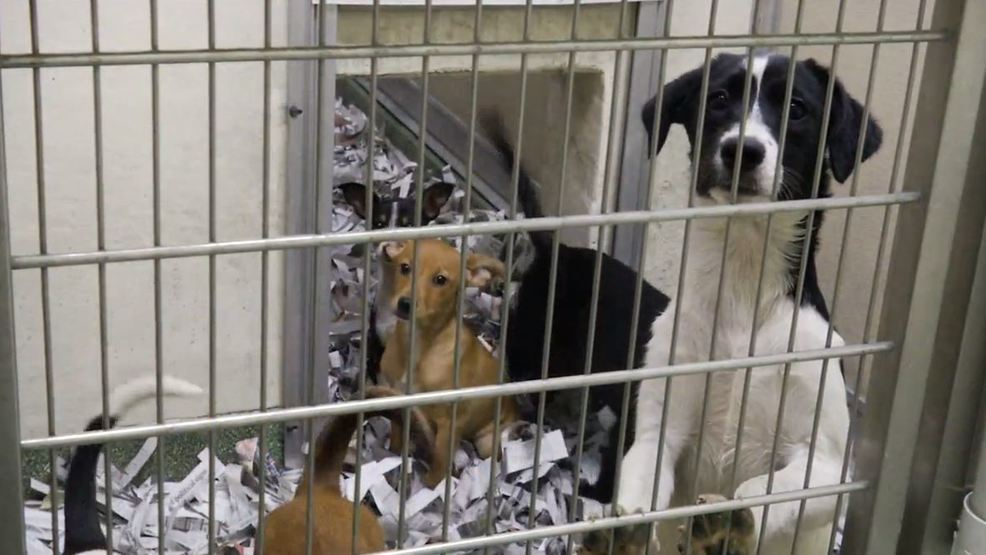 Lewiston Animal Shelter Helps Rescue Puppies Kittens At Risk Of