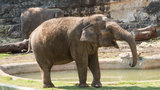 Lucky, one of the oldest elephants in the country, celebrates 60th birthday Sunday