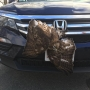 Red Tail Hawk rescued after being stuck in car grille