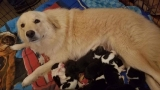 Orphan pups meet mother dog who lost puppies in barn fire: 'Daisy is in heaven!'
