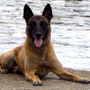 Three Rivers Police K9 helps make several arrests