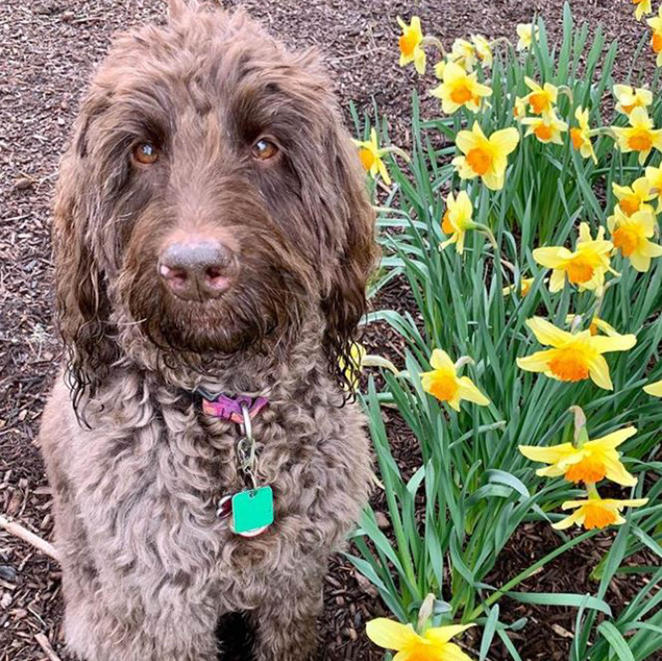 Stopping to smell the flowers / Image courtesy of Instagram user @rosewooddaisydoodle // Published: 4.1.20