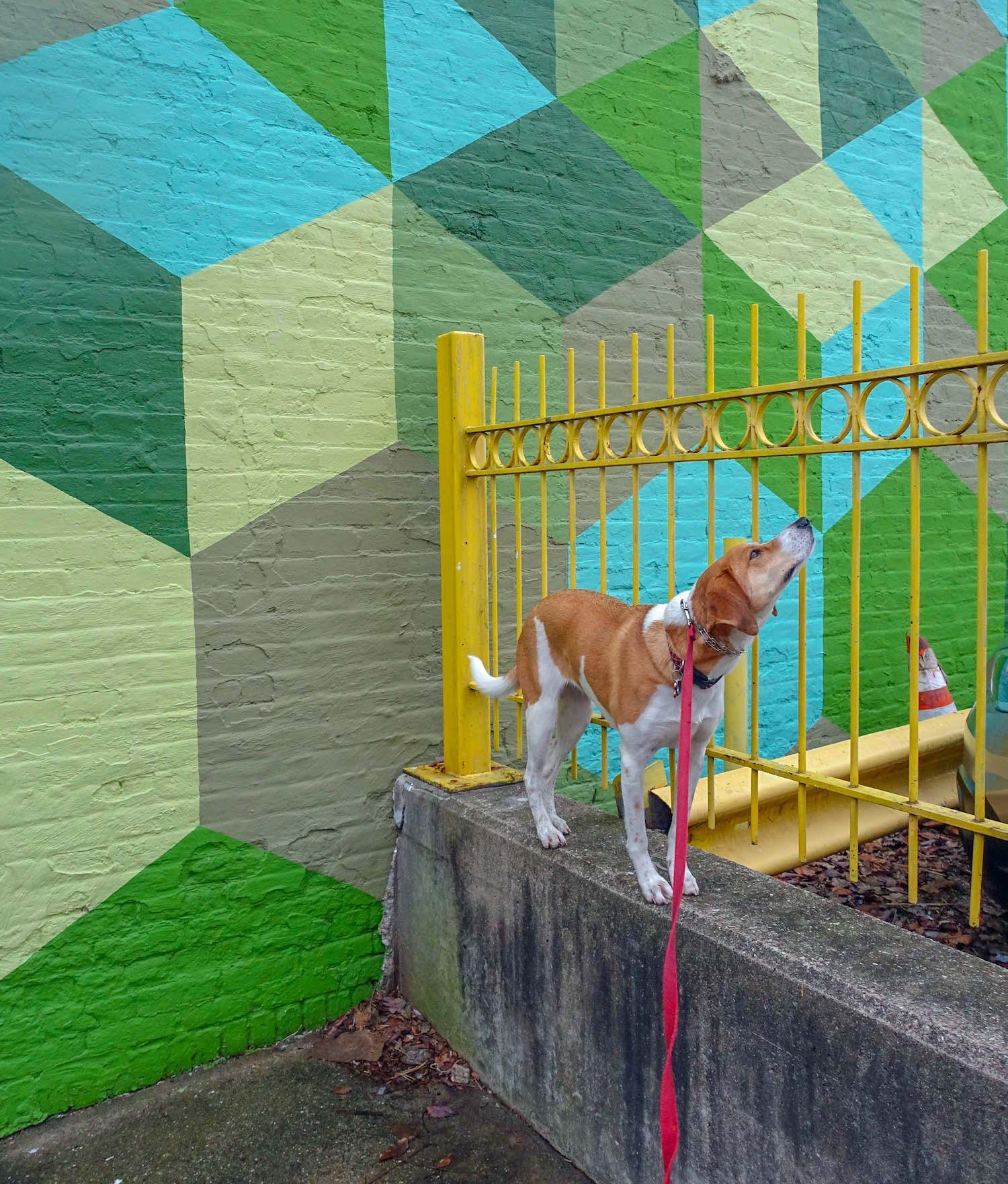 LOCATION: Findlay Market parking lot / Mollie is a local Instagram celebrity. Famous for posing on fire hydrants in front of ArtWorks murals (and other Cincy landmarks), this hound dog has officially stolen our hearts. You can follow her adventures on Instagram @molliethehounddoggie / Image: Patti Mossey (Mollie's owner and #1 fan) // Published: 5.1.18