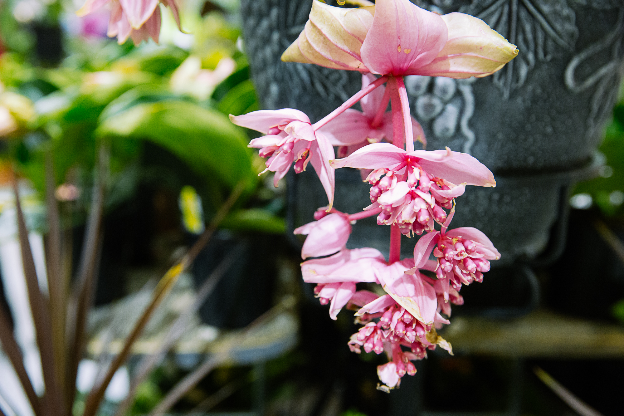 The 6 Best Flowers To Plant For Spring In Seattle Seattle Refined